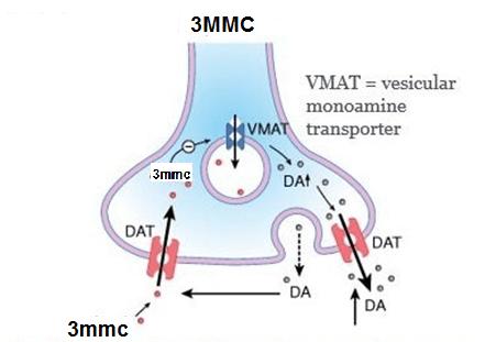 werking 3mmc op dopamine